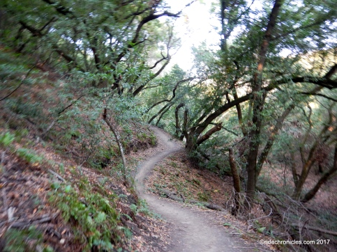martin canyon creek trail