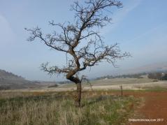 oak rd