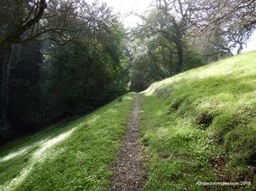 woodland tr
