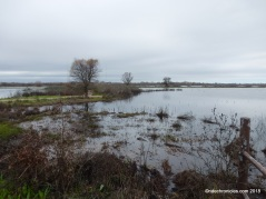 lost slough wetland