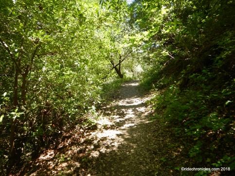 blue oak shortcut