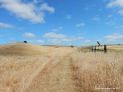 mokelumne trail/hulet hornbeck
