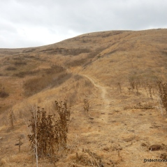 old moraga ranch trail
