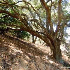 edwards creek tr