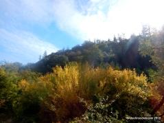 sutter creek volcano rd