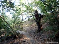 woodrat tr