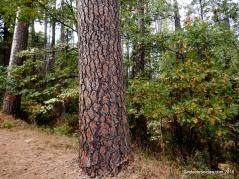 pine grove volcano rd