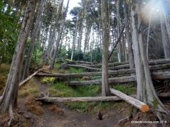 upper jordan tr