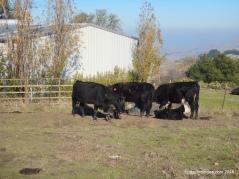 ranch tr