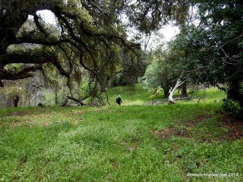 to mountain spring creek