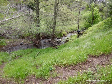 mountain spring creek