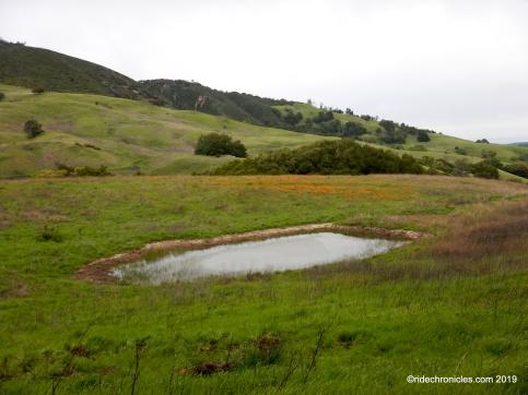 frog pond rd